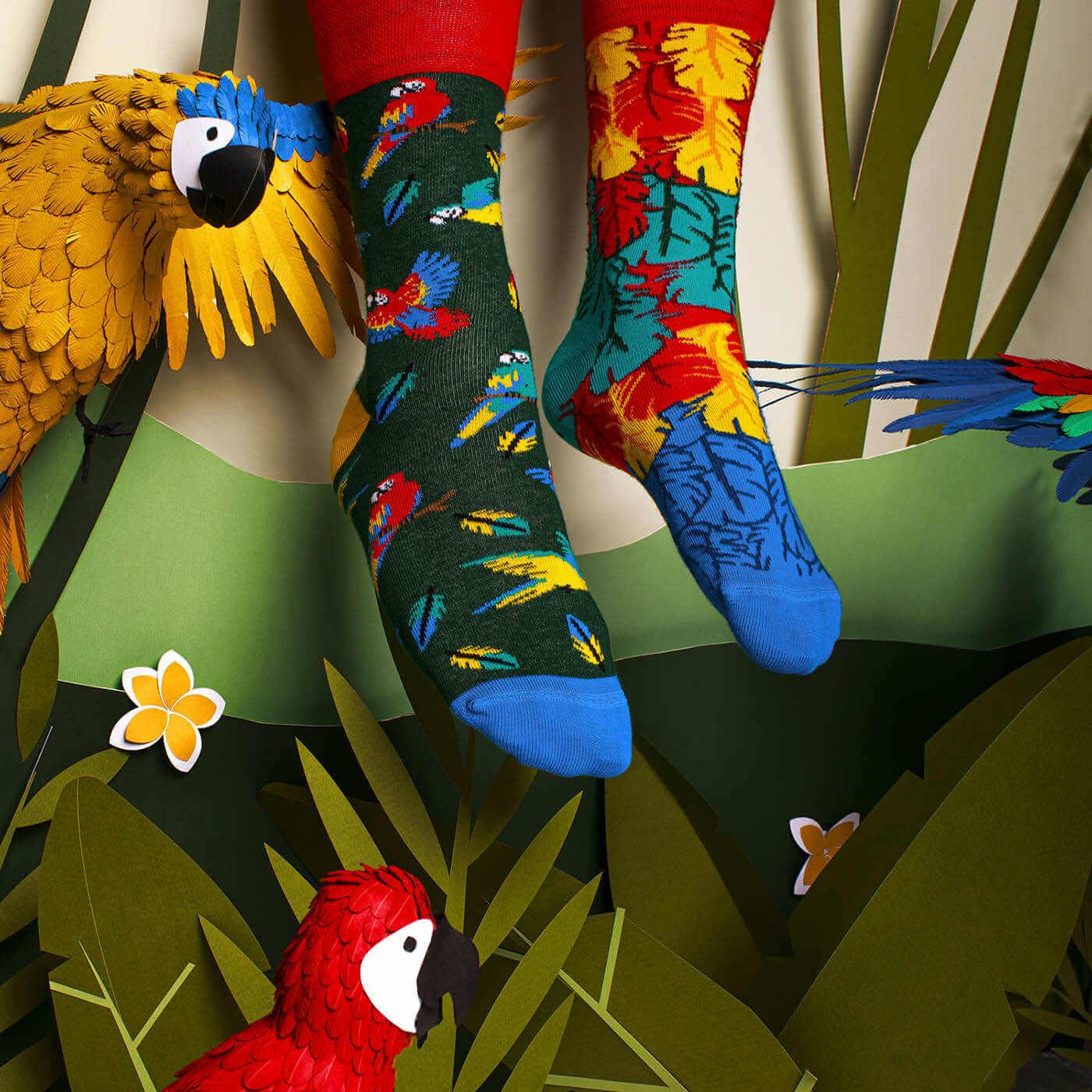 kolorowe skarpetki w papugi